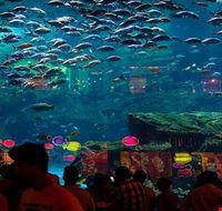 73390  aquarium