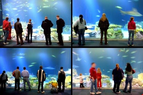 74193  shedd aquarium