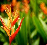 74643  giardino botanico