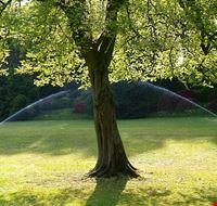 74863  parco giardino di sigurta