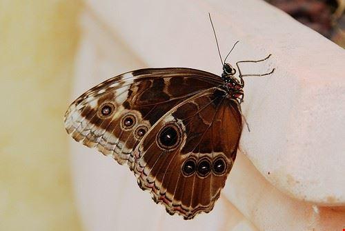 75109  butterfly arc