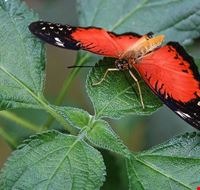 75110  butterfly arc