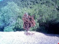 riserva wwf di capoterra