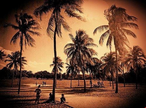 75359  beach paradise