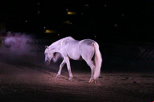 75733  white horse