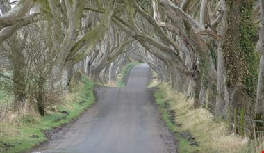 76079_ballymoney_dark_hedges