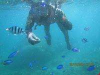 asinara daving center di conconi alberto e c diving center