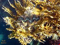 i negozi del corallo