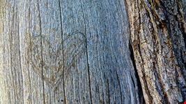 arte legno di passeri roberto