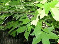 la valle delle farfalle