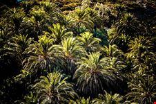 foresta naturale di palme a vai