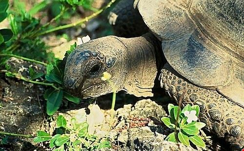 77538  isola delle tartarughe giganti