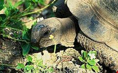 isola delle tartarughe giganti