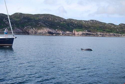 77544  bagno con i delfini