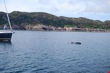 bagno con i delfini
