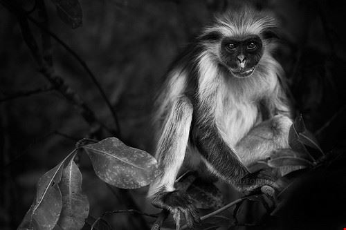 77547  foresta delle scimmie