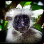 foresta delle scimmie