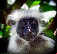 77548  foresta delle scimmie