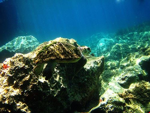 77732  diving
