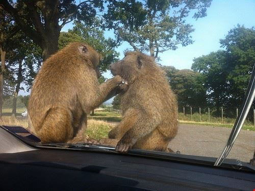 78044  knowsley safari