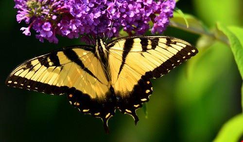 78584  casa delle farfalle