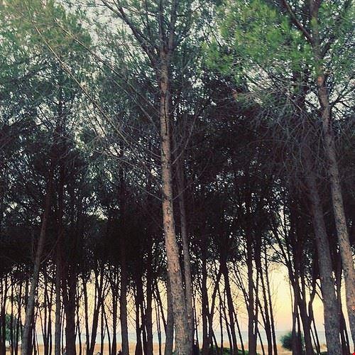 78586  il parco naturale nella pineta