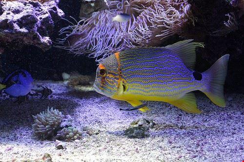 aquarius dive school