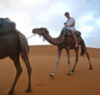 80201  cammellata nel deserto