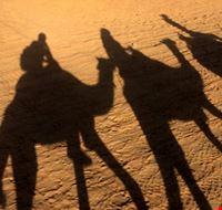 80202  cammellata nel deserto