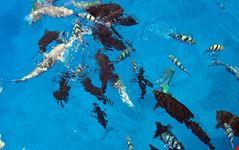 crociere subacquee nel mar rosso