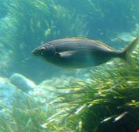 80247  aquascope sottomarino