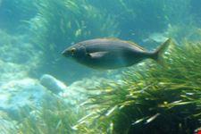 aquascope sottomarino