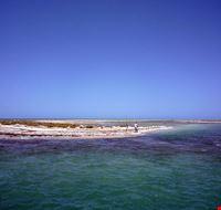 80277  isola di flamingo