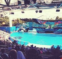 80342  sea world
