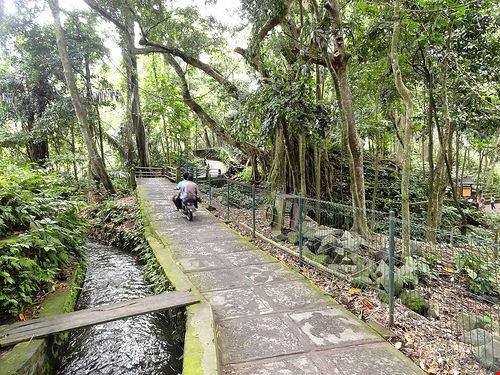 80445  la foresta delle scimmie