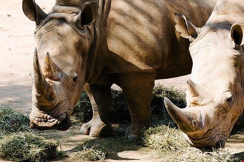 80500  johannesburg zoo