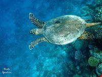 baia delle tartarughe
