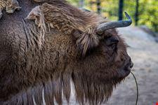 zoo di helsinki korkeasaari