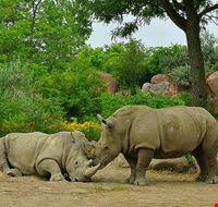81503  toronto zoo