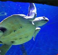 81773  melbourne aquarium