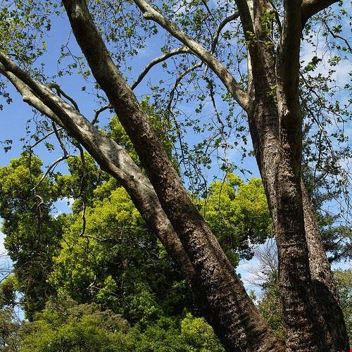 81775  royal botanic garden