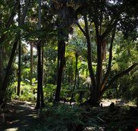 81777  royal botanic garden