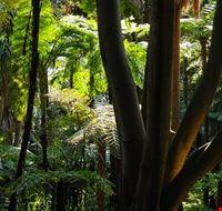 81778  royal botanic garden