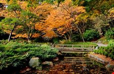vancouver nitobe memorial garden