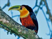 birdwatching sul conero