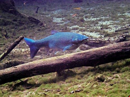 un viaggio tra la fauna  marina