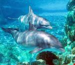 orlando delfini al giardino zoologico