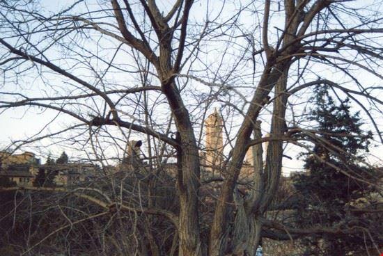 fra gli alberi