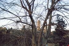 fra gli alberi san gimignano