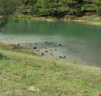 83452  lac de la cavayere